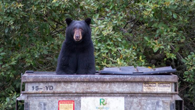 bear-in-garbage-jbutewicz-heysmokies