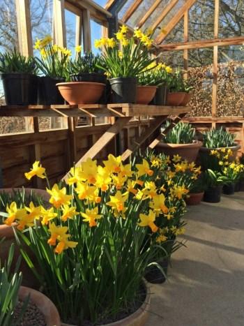 Master Gardener Flower and Garden Show
