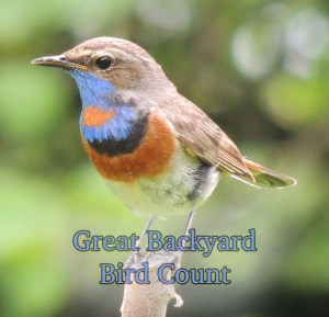 Great backyard bird count.