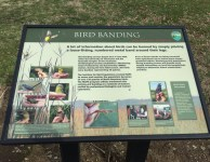Tennessee's newest state park, Seven Islands Birding Park, is a great place to view many varieties of birds year round!