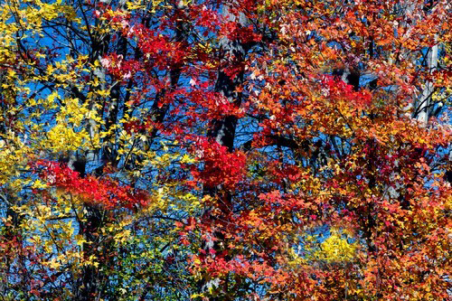 Fantastic Smoky Mountain Fall Foliage Forecast!