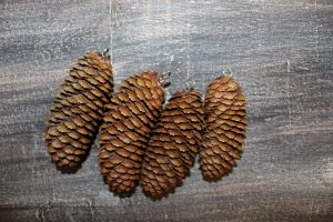 screw-eyes-added-to-pinecones