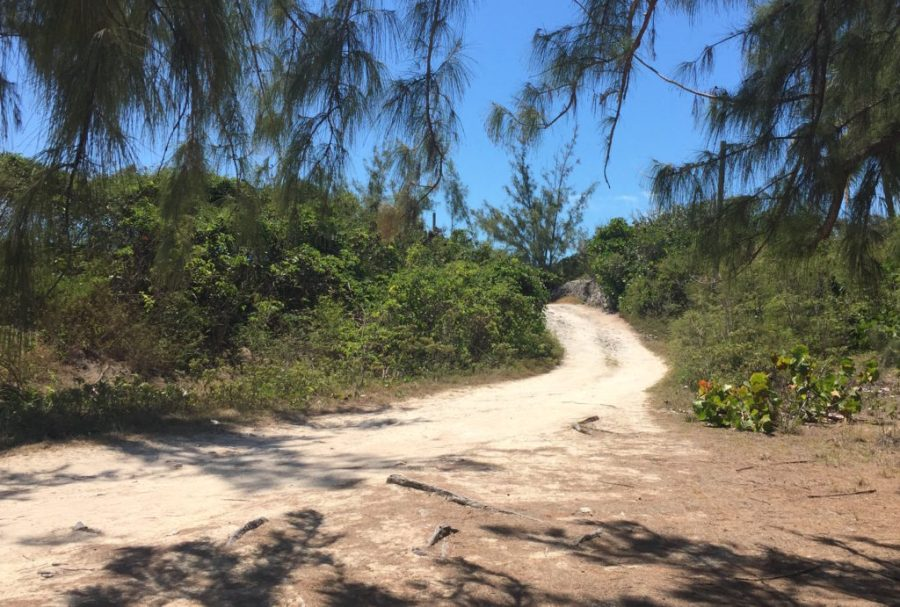 shaded drive to forbes hill beach
