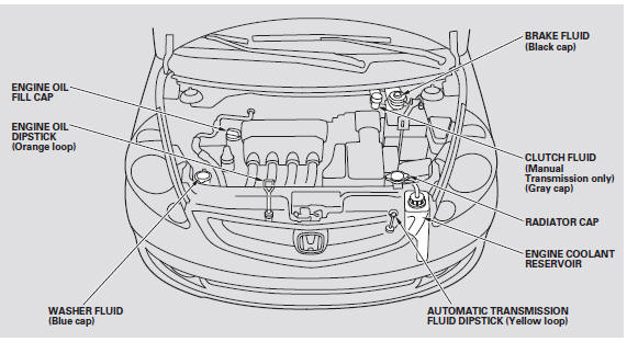 Fluid Locations :: Maintenance :: Honda Fit 2001-2008