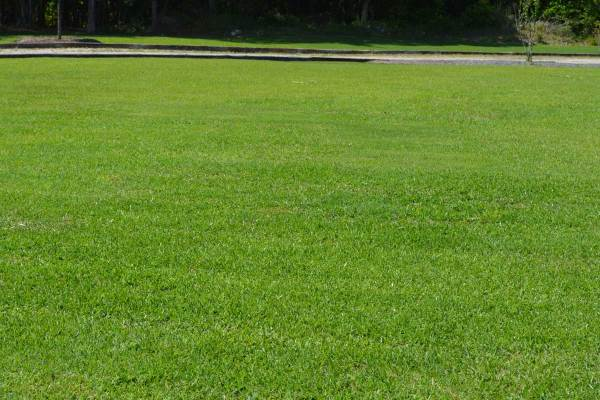 lawn care services - & landscaping