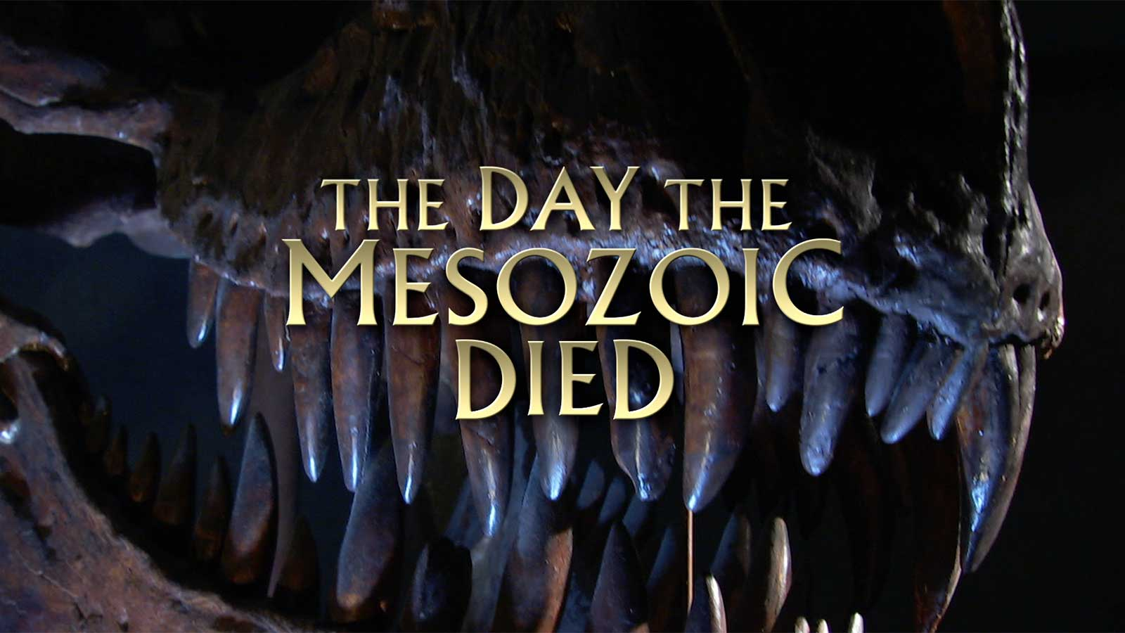 Printables Of The Day The Mesozoicd Worksheet Answers