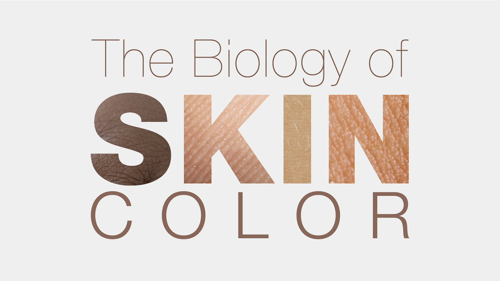 The Biology Of Skin Color