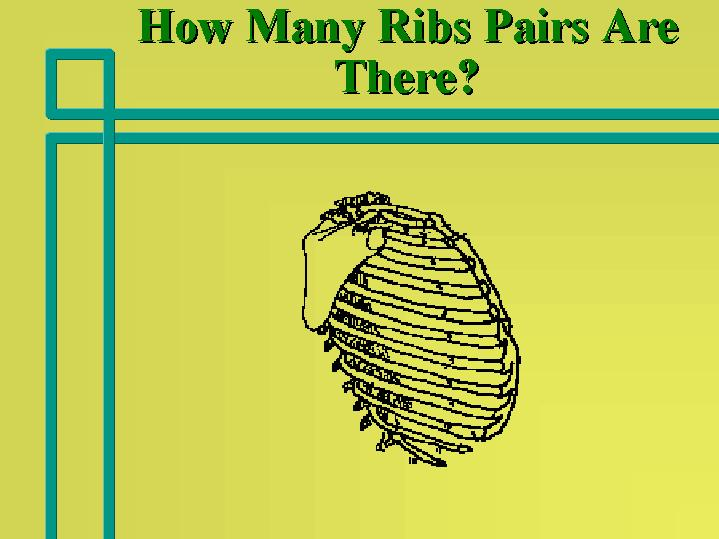 How Many Ribs Pairs Are There?