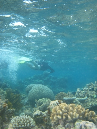 Great Barrier Reef - diving