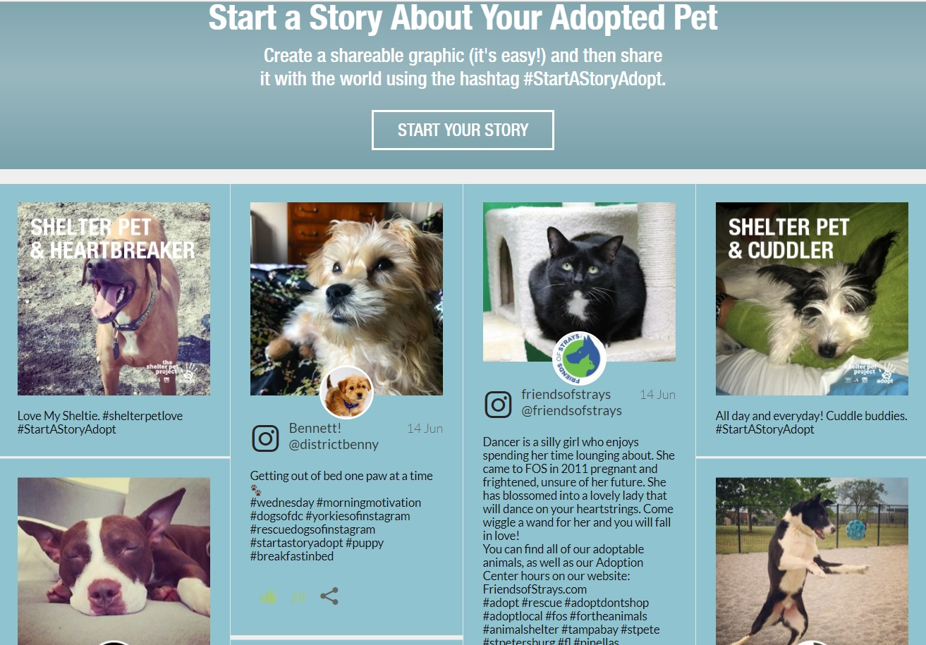 Shelters adopt story