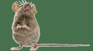 mouse pest control exterminator service in michigan