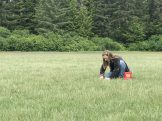 Gabby harvesting