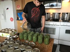 Dylan fills the jars with the pickling brine