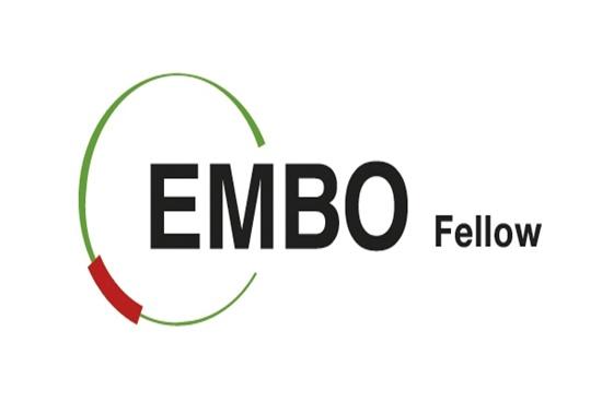 Avrupa Moleküler Biyoloji Organizasyonu (EMBO) Yerleşim Desteği Programı