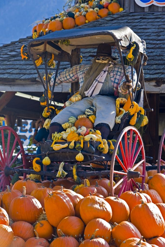 Fall Moving Wallpaper Funny Old Horse Buggy Display Photo Information