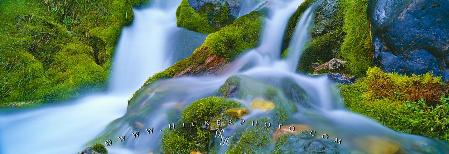 Panoramic Wallpaper Fall Free Wallpaper Background Panorama Rainforest Green Moss
