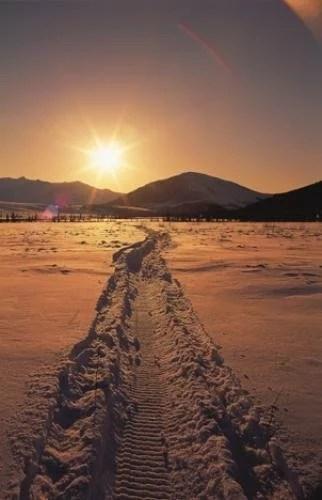 Animal Print Desktop Wallpaper Winter Scenery Snowmobile Track Sunset Pictures Photo