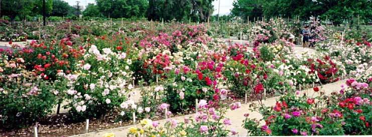 Garden May Panorams  Home Garden   Ifmore. Artex Easifix Exterior Render Repair Kit Reviews. Home Design Ideas