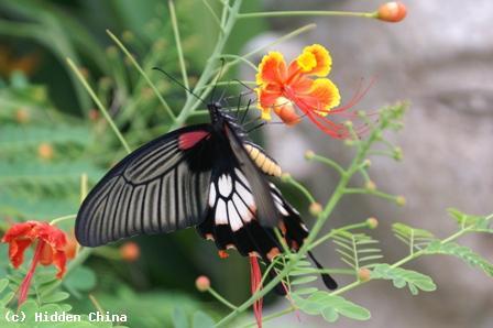 Hidden China GmbH  Fauna in China