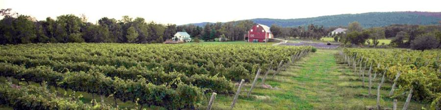 Vineyard, Tasting Room, and Barn before sunset
