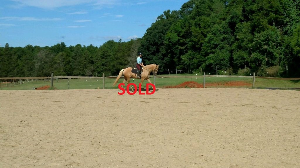 Sunny Sold A Horse For Sale In Winston Salem