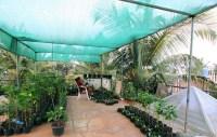 Rooftop Gardening Bangalore - Garden Ftempo
