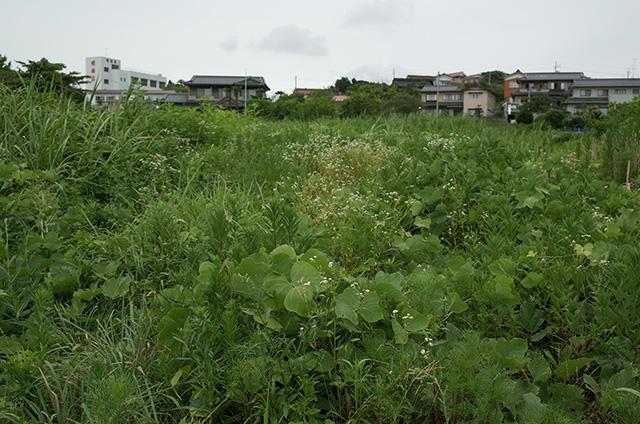 Kesennuma Oshima -Landscape during a walk 1-  Hidemi Shimura