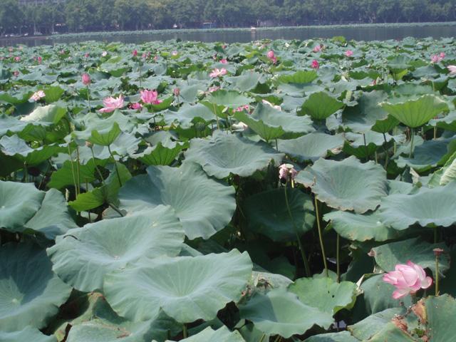 杭州-西湖の北側 Hangzhou-North side of West Lake 杭州 Hangzhou Hidemi Shimura
