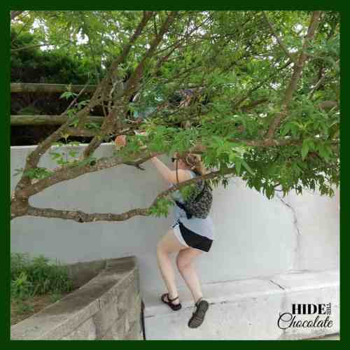 The Green Ember Book Club Tree Climbing