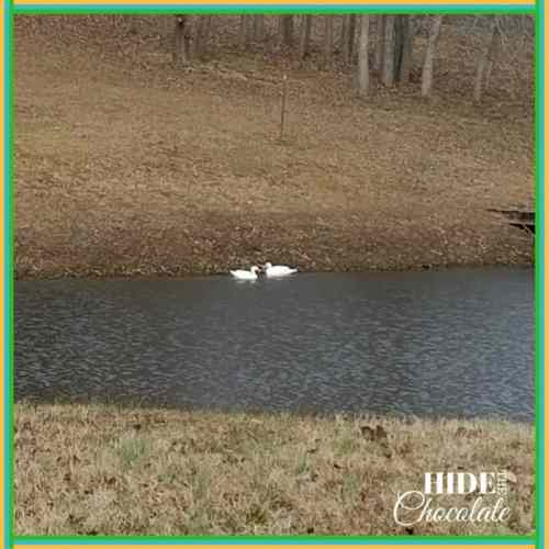 Those Darn Squirrels Fly South Book Club Snow Geese