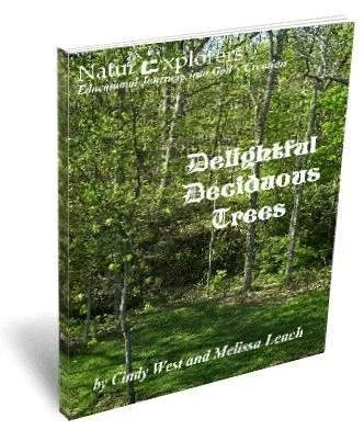 Delightful Deciduous Trees