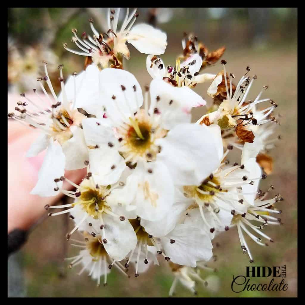 The Giving Tree Nature Book Club Tree Blooms