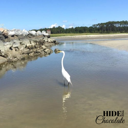 Turtle in the Sea Nature Book Club - Great Egret