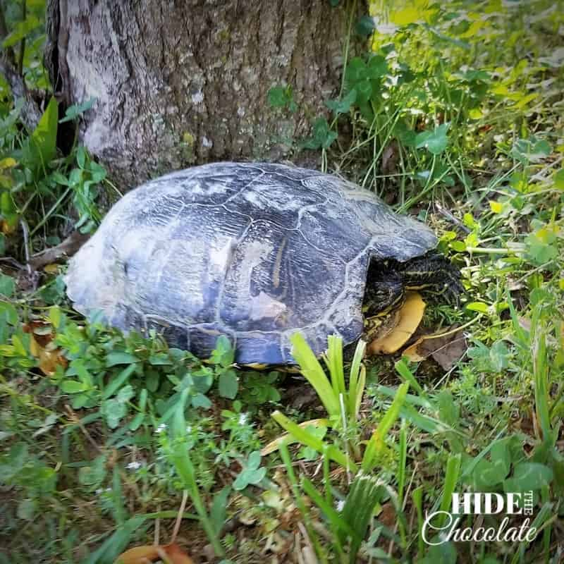 Yertle the Turtle Nature Book Club - Turtle
