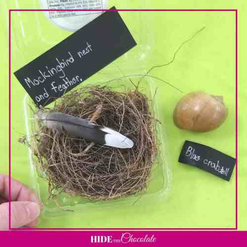 A House is A House for Me Nature Book Club-Nest and Shell