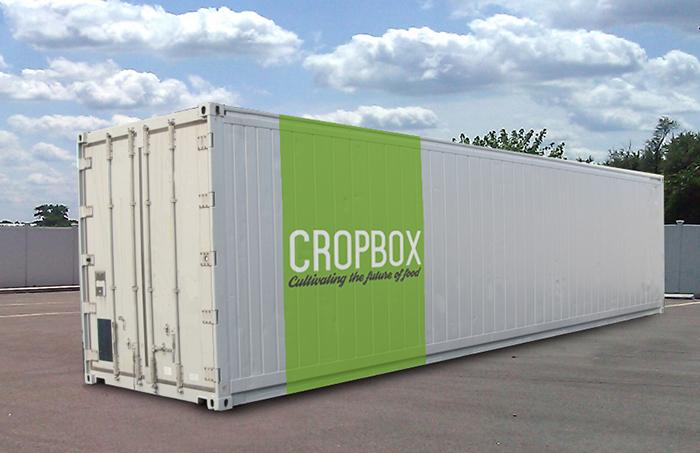 Hidroponía en contenedores
