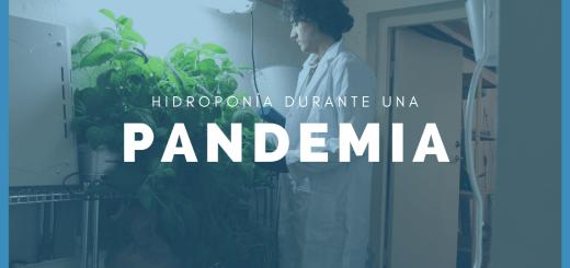 Banner de hidroponía durante una pandemia con Henrique cultivando.