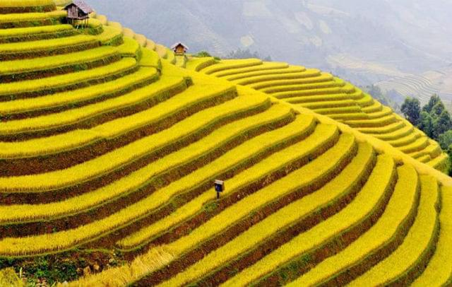every step up to heaven mu cang chai