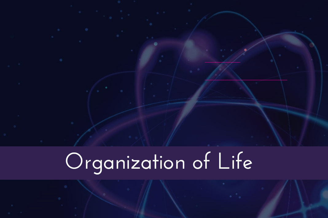 simple atom diagram 2000 jeep cherokee sport radio wiring organization of life - the hierarchy