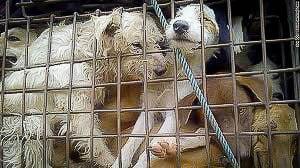 Netwerk van hondensmokkelaars actief in de Isaan