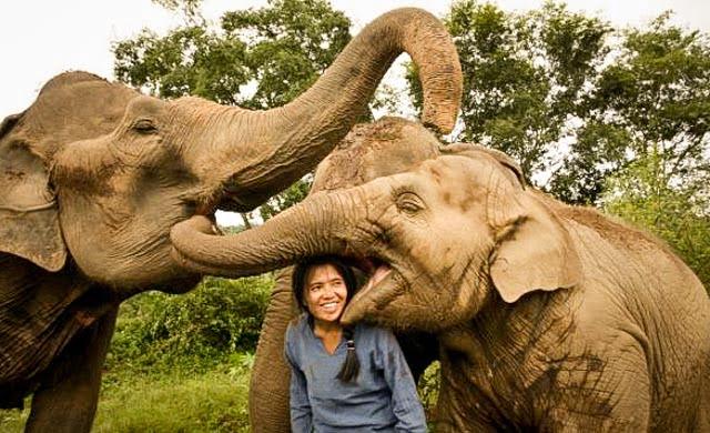 Thaise olifantenparken