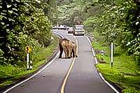 Khao Yai Nationaal Park