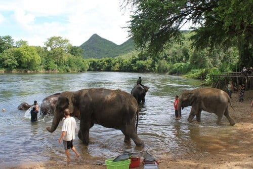 vrijwilligerswerk bij elephants world in kanchanburi