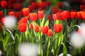 Thailand vol met bloemen