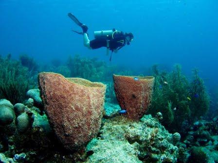 duiken en snorkelen
