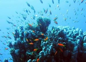 duikplekken tussen Koh Samui en Koh Tao