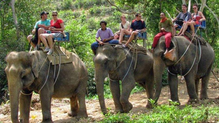 'TripAdvisor verdient aan dierenattracties'