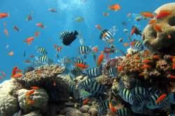 Coral_reef_1680x1050