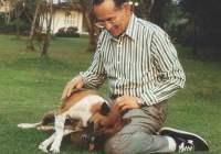 thai-king-dog-151215
