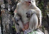 Thaise apen voeren is strafbaar